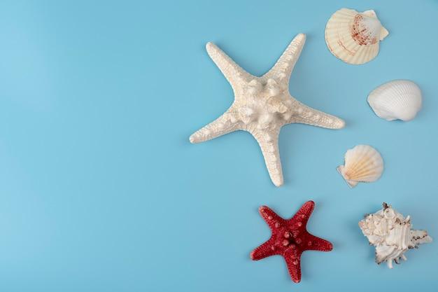 Морские ракушки на голубом фоне морские сувениры концепция отпуска flat lay