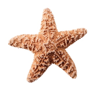Малый starfish seastar, изолированных на белом фоне