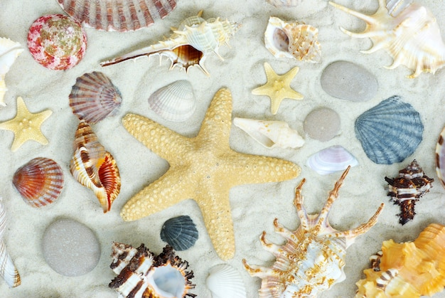 Starfish and shells on the beach, flat lay