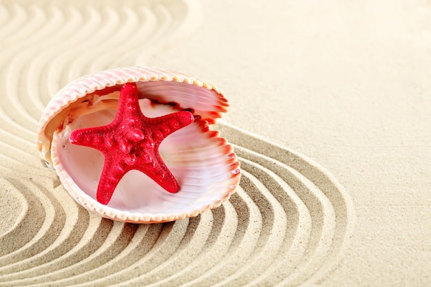 Starfish and shells on the beach.