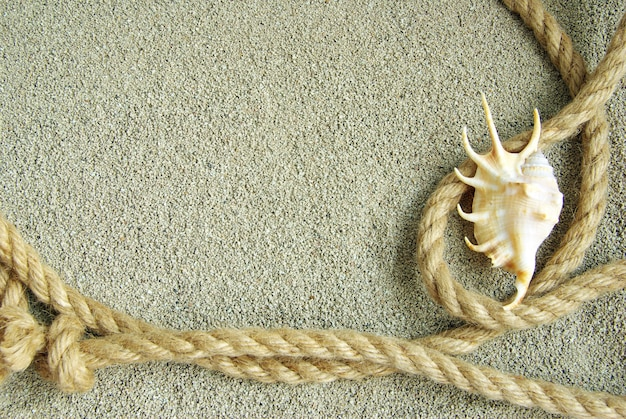 Starfish and shells in rope on sand