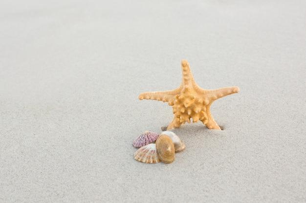 Starfish and shells on sand