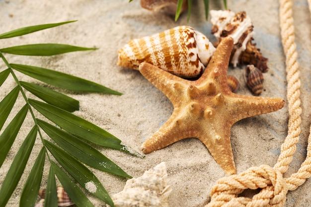 Stelle marine e conchiglie nella sabbia