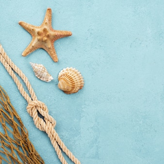 Starfish and shells with copy-space