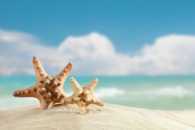 Starfish standing on the sea
