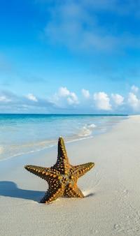 Starfish at the tropical beach