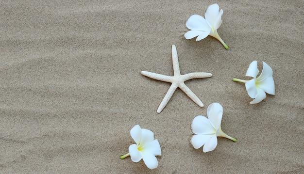 Морская звезда с цветами плюмерии на песке. летний фон концепция