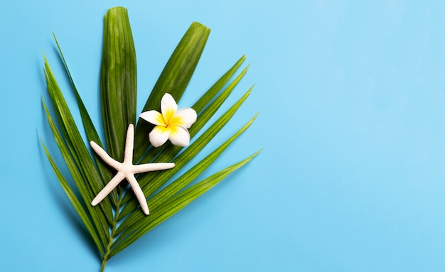 Starfish with plumeria or frangipani flower on tropical palm leaves on blue background. enjoy summer holiday concept.