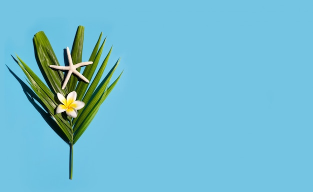 Морская звезда с plumeria или frangipani цветок на тропических пальмовых листьев на синем фоне. наслаждайтесь концепцией летнего отдыха.