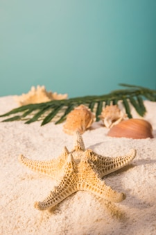 Starfish with shells and leaves on sandy beach