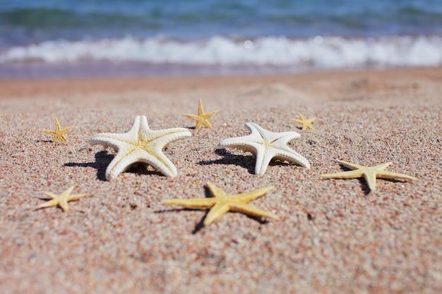 여름 휴가 기간 동안 모래 해변에 starfishes