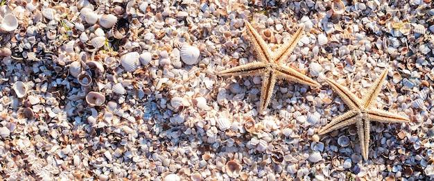 Морские звезды на фоне ракушек в солнечный день. вид сверху, плоская планировка. баннер.