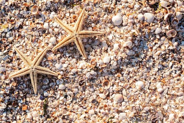 Морские звезды на фоне ракушек в солнечный день. вид сверху, плоская планировка.