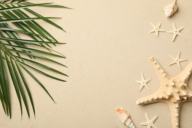 Starfishes and palm branches on sea sand, space for text