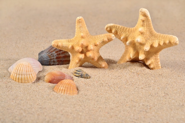 모래 배경에 불가사리와 조개 클로즈업