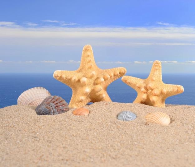 바다 배경 해변 모래에 불가사리와 조개