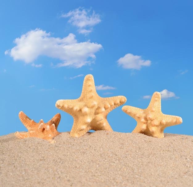 푸른 하늘에 대 한 해변 모래에 불가사리