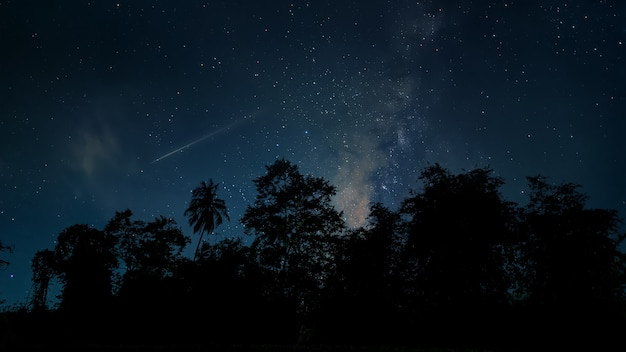 Starry night over the forest with milky way