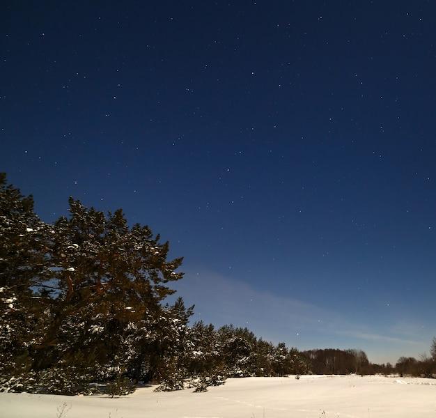 소나무 숲 위의 별이 빛나는 하늘. 보름달의 겨울 밤에 촬영되었습니다.