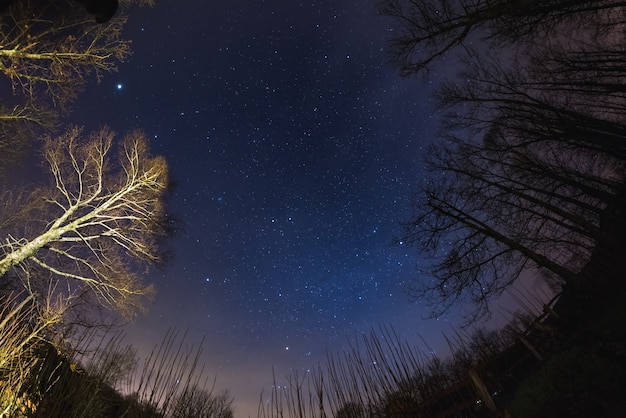 The starry sky from woodland