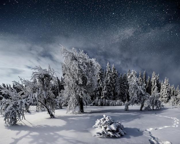 冬の雪の降る夜の星空。大晦日の素晴らしい天の川。星空雪の降る冬の夜。天の川は素晴らしいです Premium写真