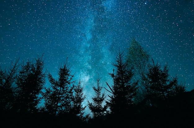 소나무 숲 위에 별이 빛나는 하늘