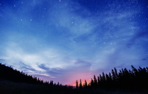 木々の間の星空