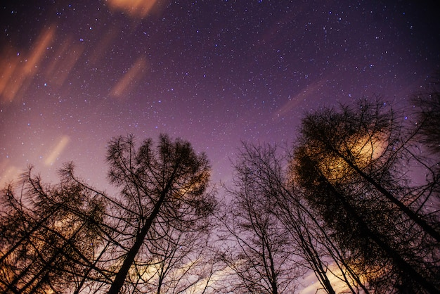 Starry sky through the trees