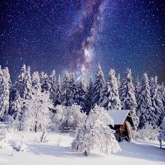Starry sky and a tree in frost at the beautiful
