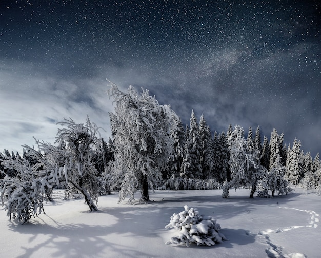 Starry sky in winter snowy night. fantastic milky way in the new year's eve. starry sky snowy winter night. the milky way is a fantastic
