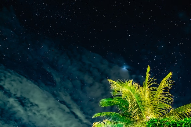 The starry sky with coconut in the night