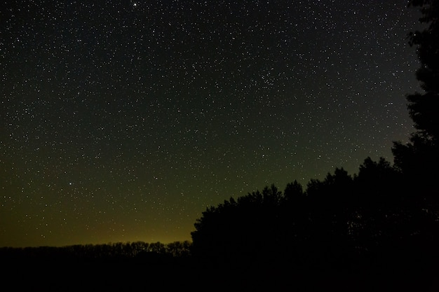 Stars in the sky at night. outer space above the forest