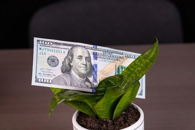 Startup financial idea