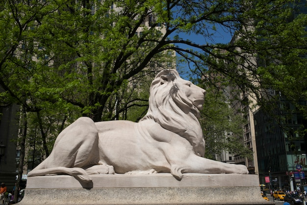 Statue of lion at new york public library, midtown, manhattan, new york city, new york state, usa