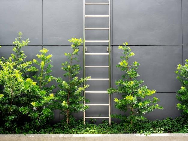 회색 벽에 녹색 잎 근처 강철 사다리
