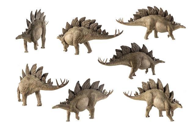 Stegosaurus dinosaur on white background .