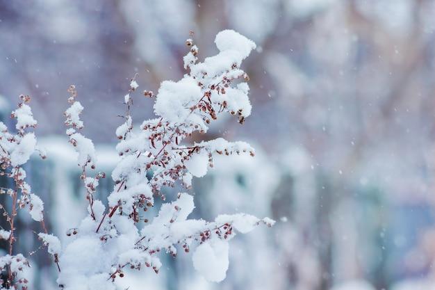 ぼやけた背景に雪で覆われた乾燥した植物の茎_