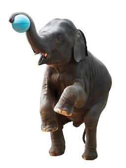 클리핑 패스와 함께 흰색 배경에 고립 된 아시아 코끼리 슈팅 농구의 단계