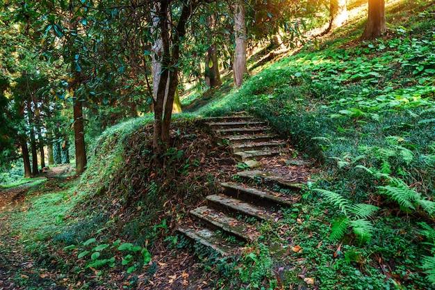Шаг тропа в таинственном зеленом лесу