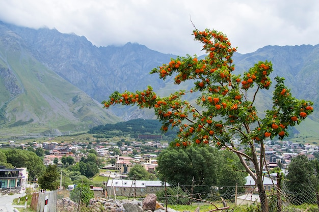 Степанцминда, грузия - 14 августа 2021 г .: вид на город степанцминда, грузия. старые дома и вид на горы.