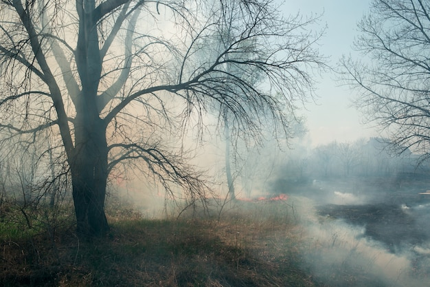 煙の草原の防火壁、春の草や小枝で燃える山火事