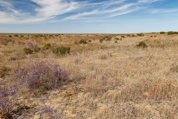 카자흐스탄의 대초원과 대초원의 꽃이 만발한 관목