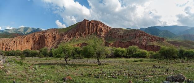 Steppe kazakhstan, trans-ili alatau, plateau assy, grove of saxaul