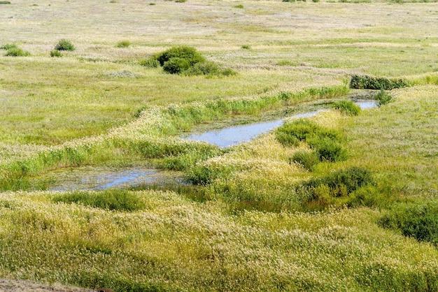 草が生い茂った土手がある草原の川。ロシア、チェリャビンスク地方のボルシャヤカラガンカ川