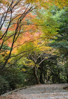 Steps leading down with autumn colored leaves in arashiyama,  kyoto, japan