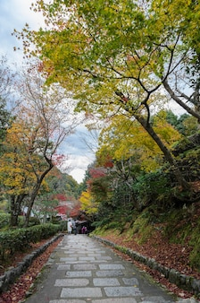Steps leading down with beautiful autumn colored maple leaves in arashiyama,  kyoto, japan