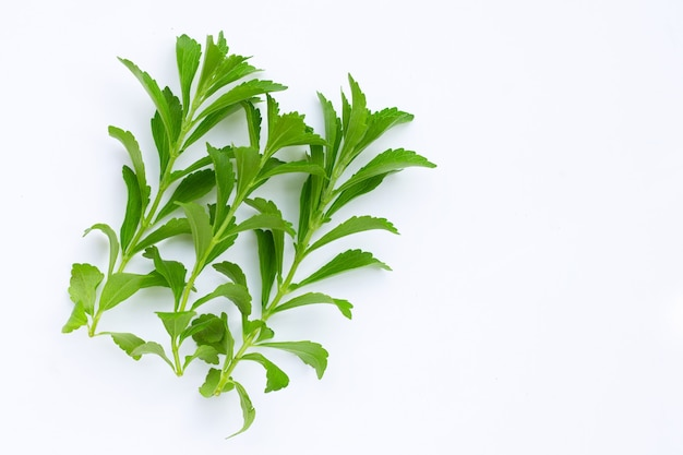 Stevia leaves on white surface