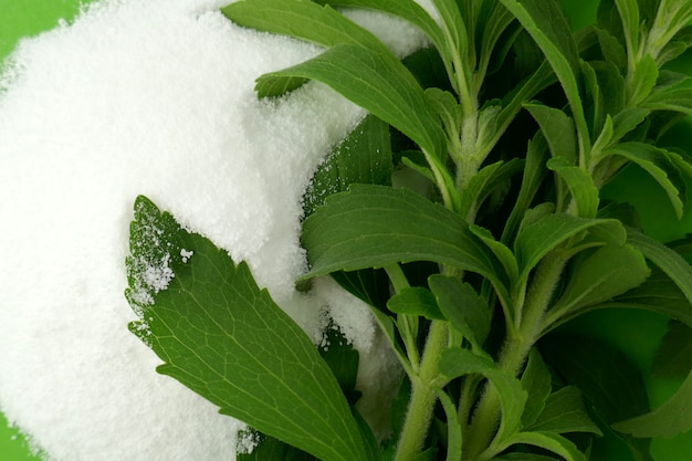Stevia rebaudiana. stevia herb twigs and white powder. natural sweetener in powder from stevia plant