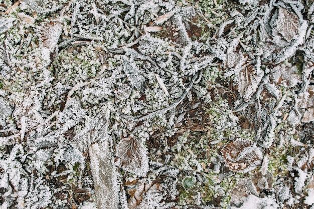 霜で覆われた棒、草、葉。初冬の地面のテクスチャ、自然の背景