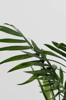 Still life arrangement of green plant